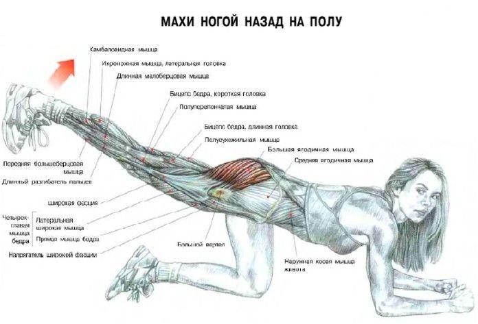упражнения для средней ягодичной мышцы: 7 тыс изображений ...