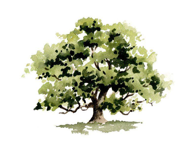 Oak Tree Art Print Wall Decor Watercolor Painting Tree