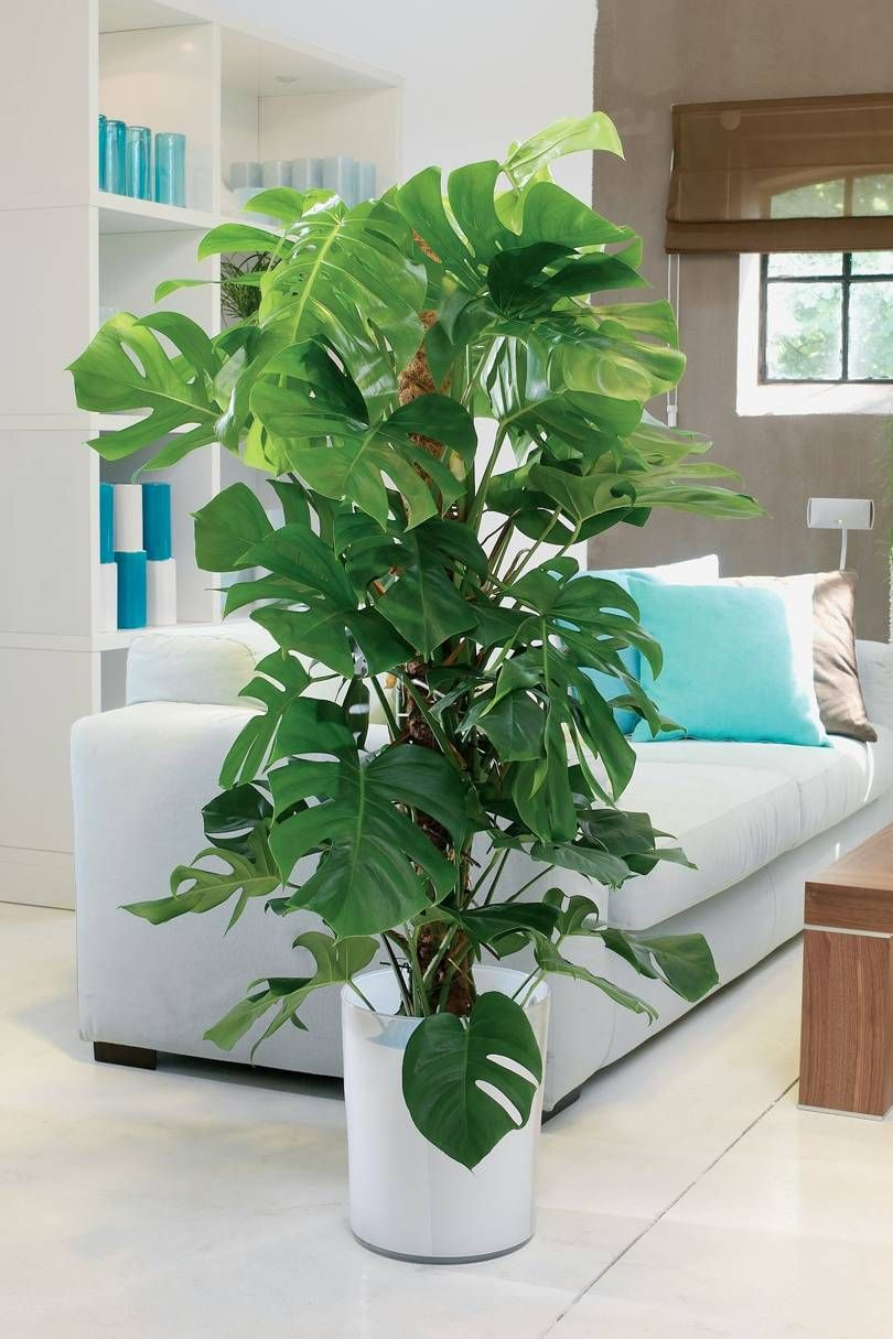 10 Cool House Plants To Grow Inside British Gq Tall Indoor Plants Plant Decor Indoor House Plants Decor