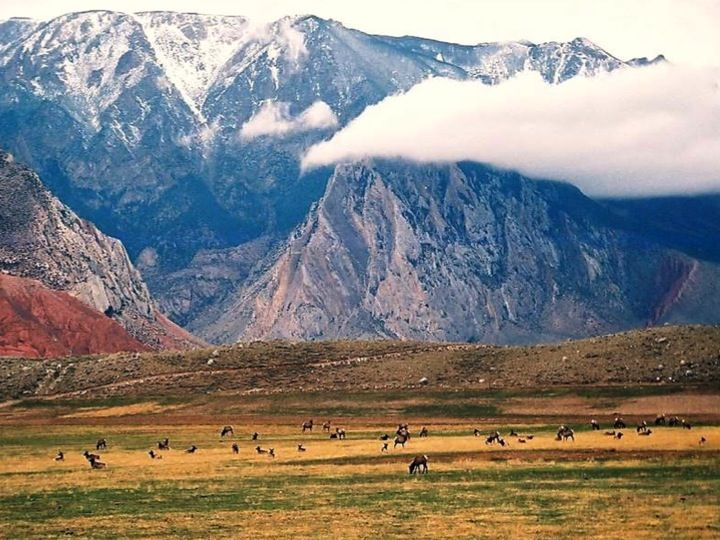 Bald peak ranch ranches for sale cody wyoming