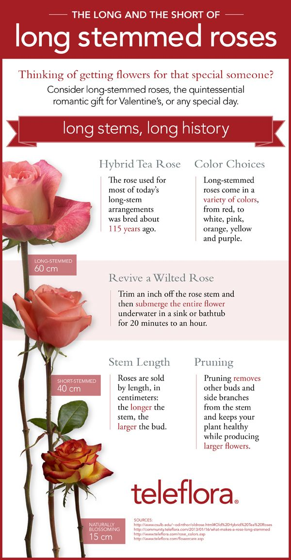 Infographic What Makes A Rose Long Stemmed Hybrid Tea Roses Types Of Roses Rose