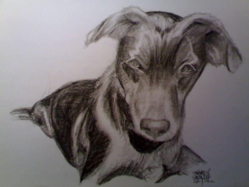 Retrato rápido realizado a grafito. #Grafito #Lapiz #Perro #Animales #blanco y negro #kirbow