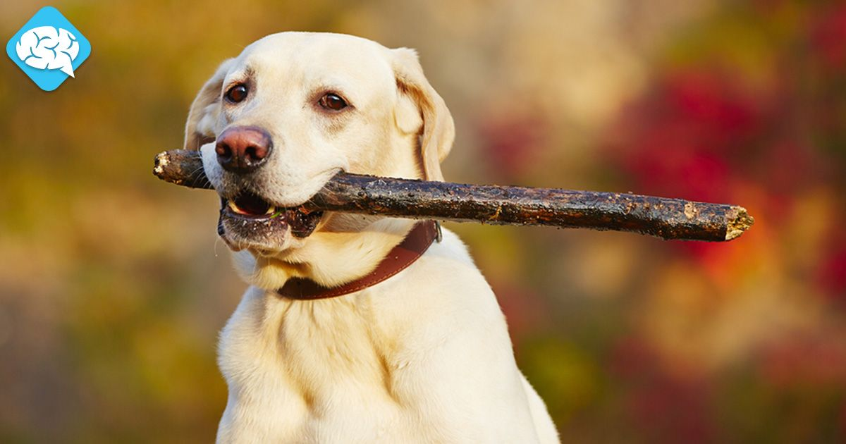 Which Breed Of Dog Are You? | BrainFall