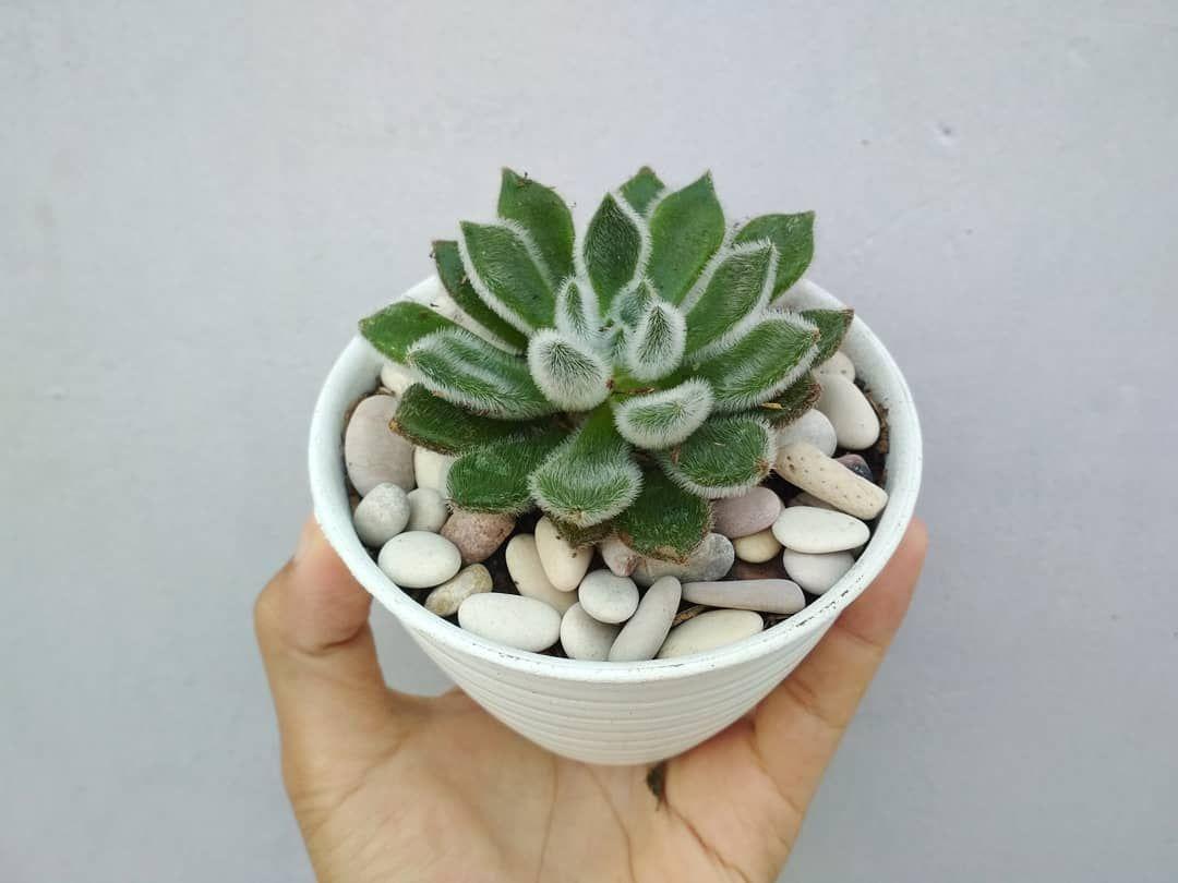 Cactus Cacti Succulent Tiny Pots Small Pots Colorful Pots