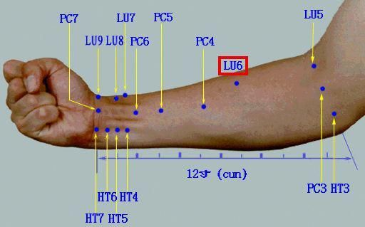 Acupuncture Points on the Medial aspect of the forearm