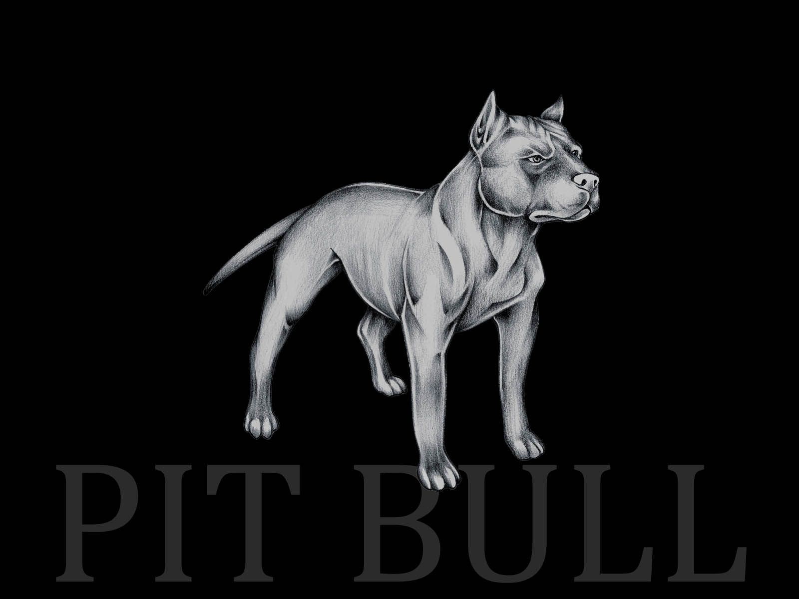 Pitbull Wallpapers Black And White Paint