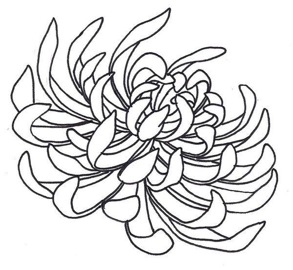 Chrysanthemum | Crisantemo | Pinterest | Dibujo floral, Bordado y Arte