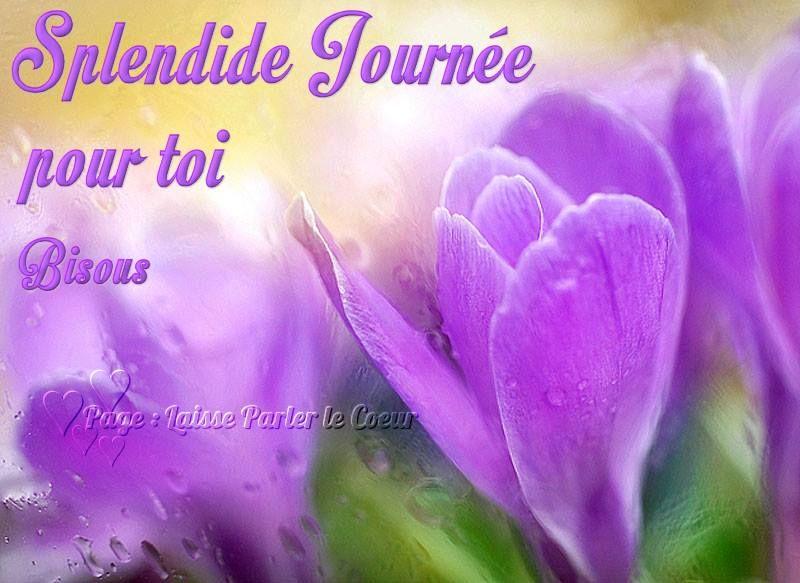 Splendide journ e pour toi bisous bonnejournee crocus fleur violet mauve rosee bonne journee - Image fleur violette gratuite ...