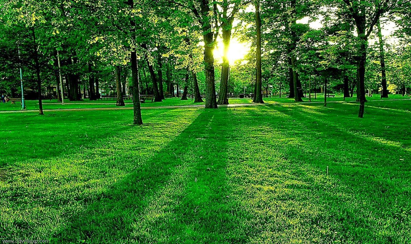 Free Nature Background Best Download Tạo Cảnh Quan Thien Nhien Hinh Nền