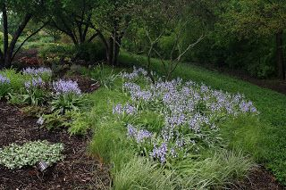 MIDWEST GROUNDCOVERS Display Gardens & Plant Trials: May 2012