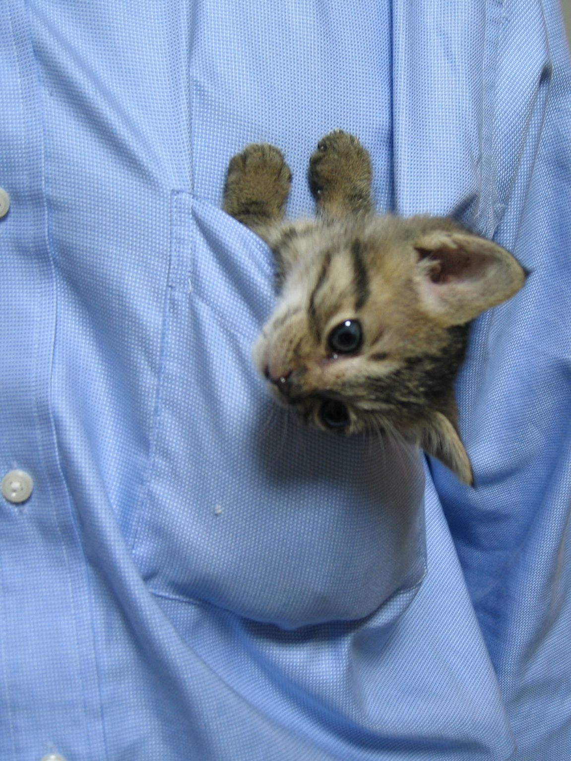 Adorable A Kitten In The Pocket Kittens Cutest Cute Animals Cats