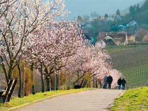 Bavaria in Spring - spas, hikes and biergartens