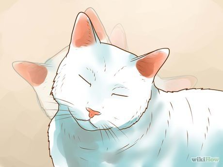 Get Rid Of Ear Mites In A Cat Cats Cat Steps Pets