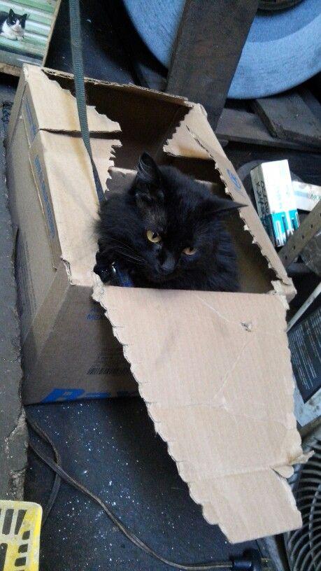 Coquito en caja de carton