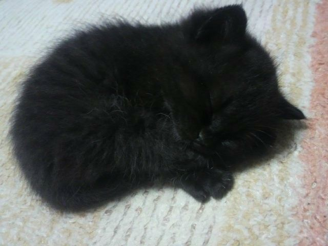 Pin By Cats Are So Cool On Teeny Weeny Tiny Newborn Kittens