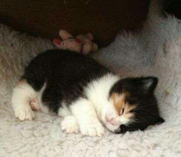 Such a wee kittie!!! xoxo...