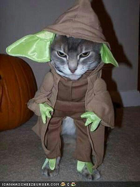 Dressed up as Yoda cat costume & if I could Iu0027d put you in extra extra small leggings so you could ...