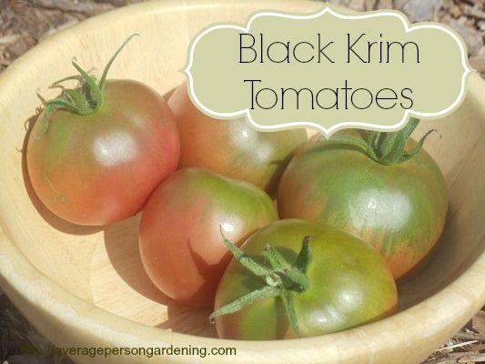 Grow Black Krim Heirloom Tomatoes Tomato Heirloom 400 x 300