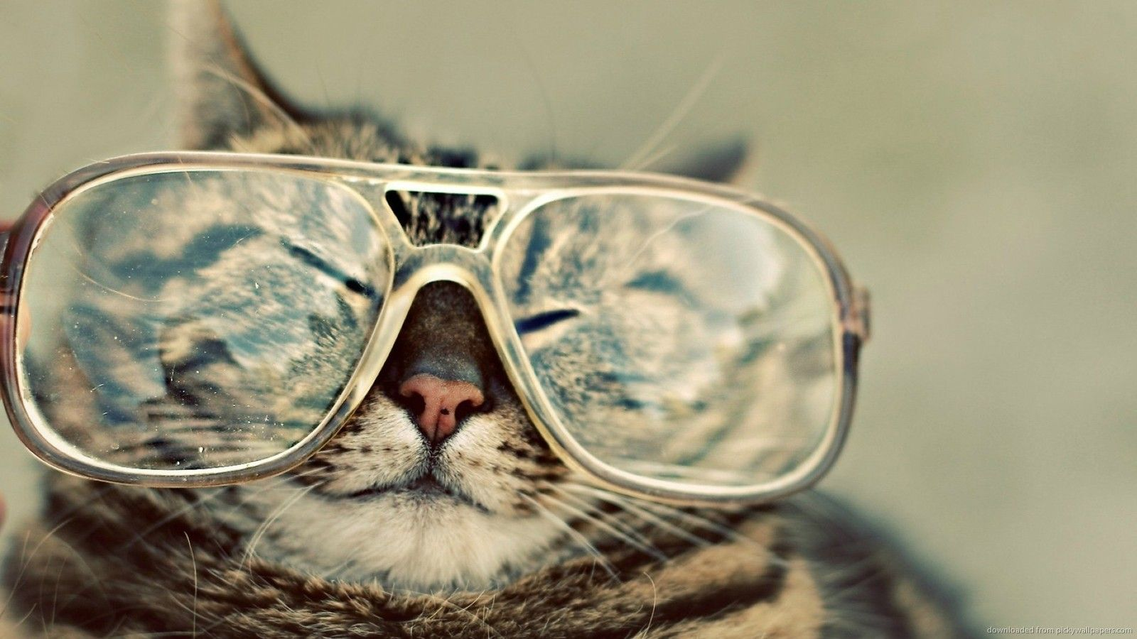 cat_with_glasses_image_09.jpg (1600×900)