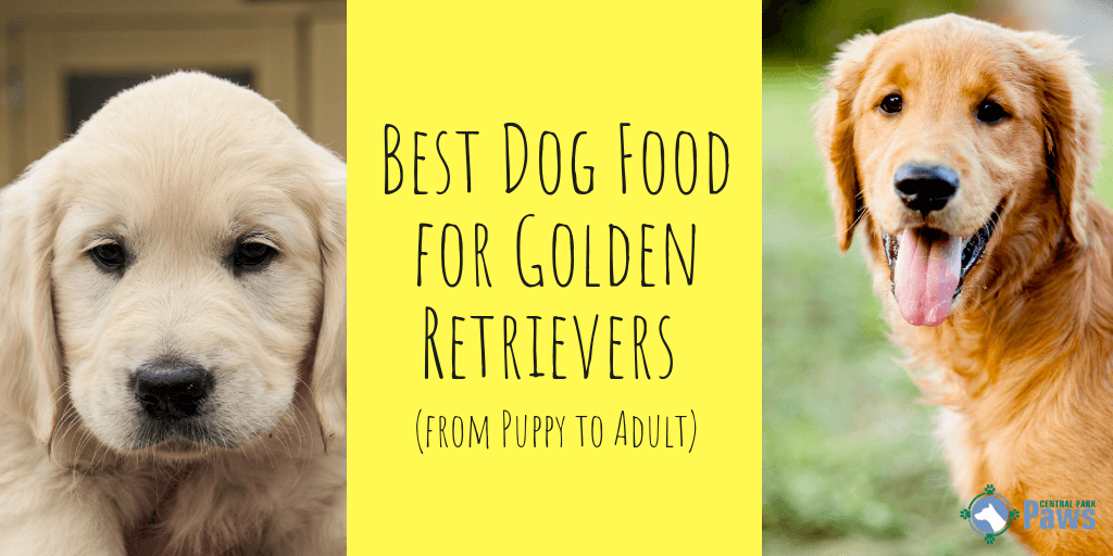 Where Paws Come to Play! Dog food recipes, Best dog food