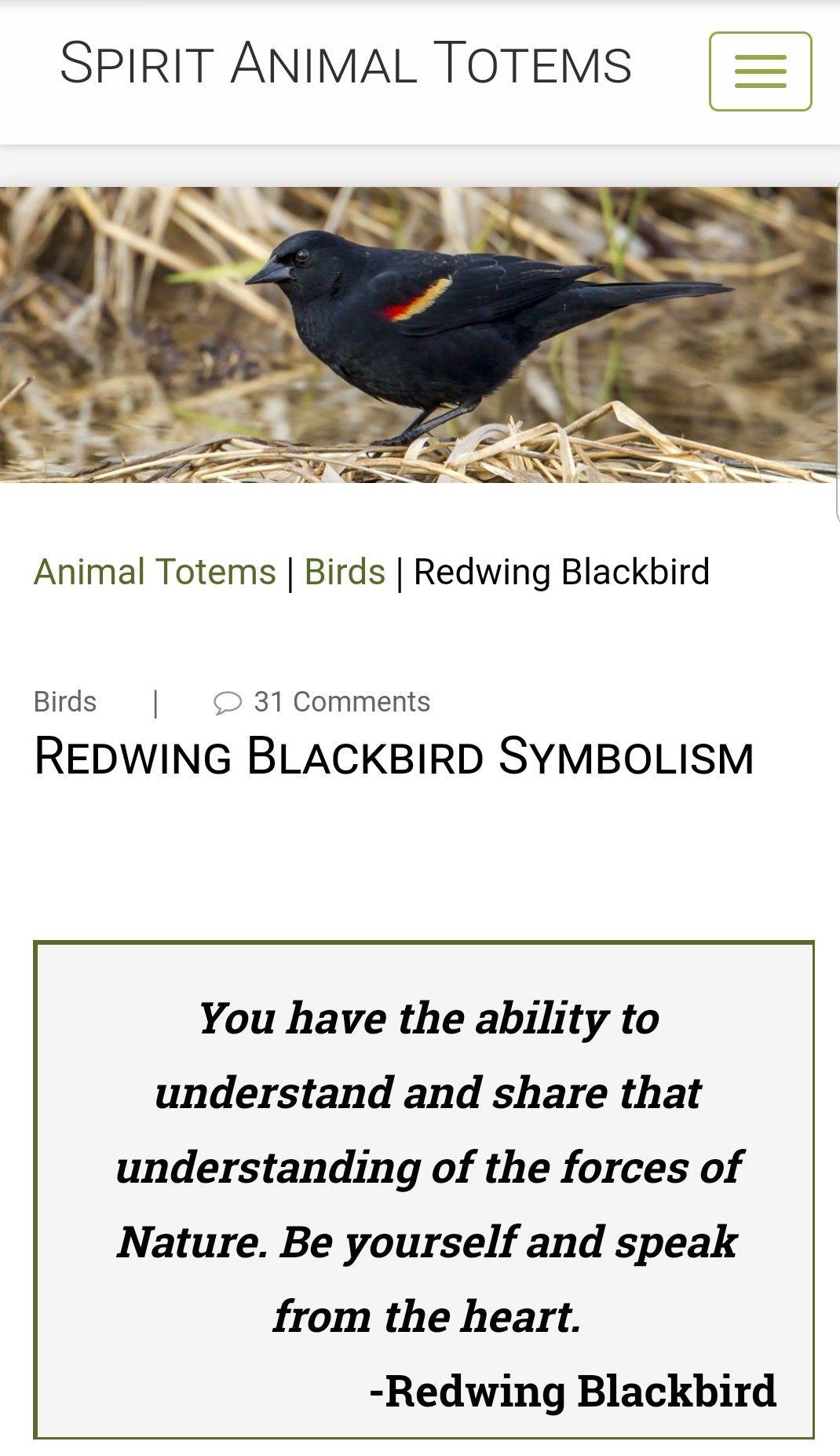 Redwing Balckbird Spirit Animal Spirit Animal Totem Spirit Animal Animal Totems
