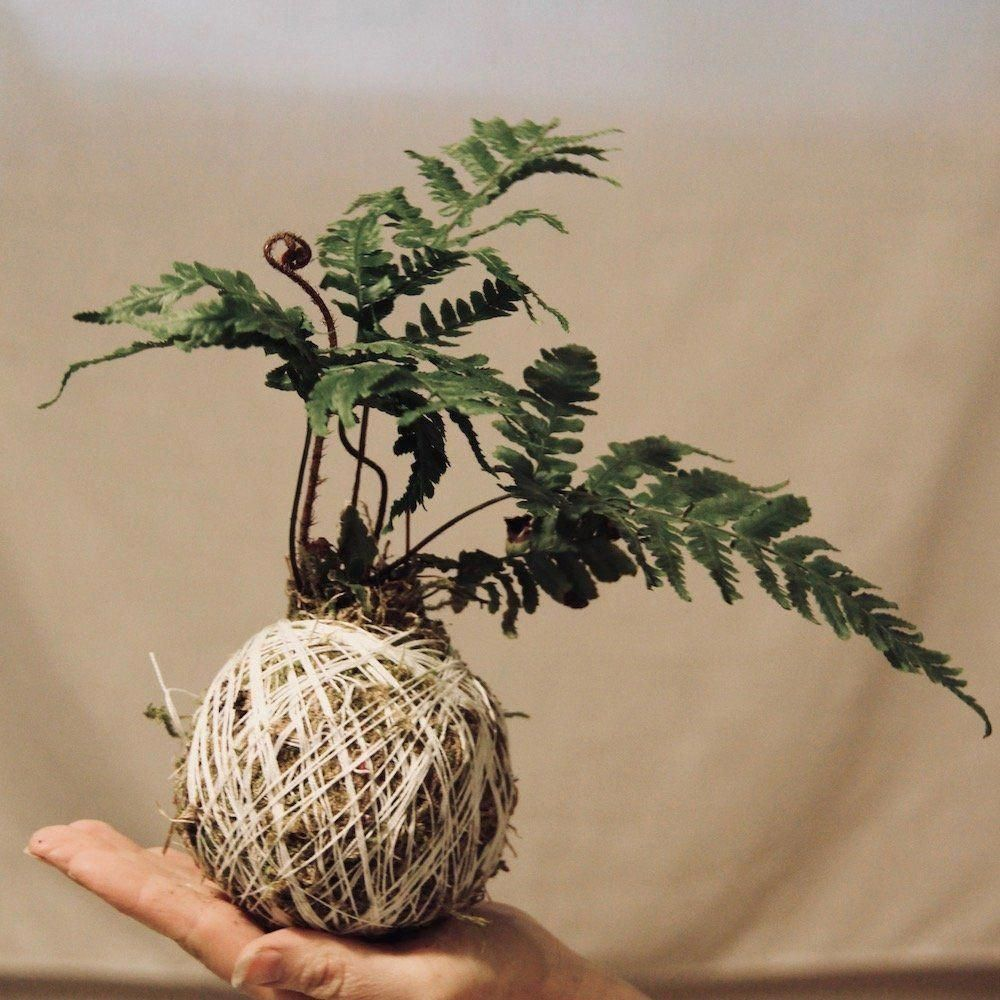 She wraps string around soil and moss to create an amazing hanging string garden! This moss ball is so gorgeous #kokedama #mossball #stringgarden #hanginggarden #Kokedamasmateriales