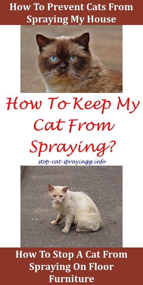 Do Neutered Male Cats Spray Urine Cat
