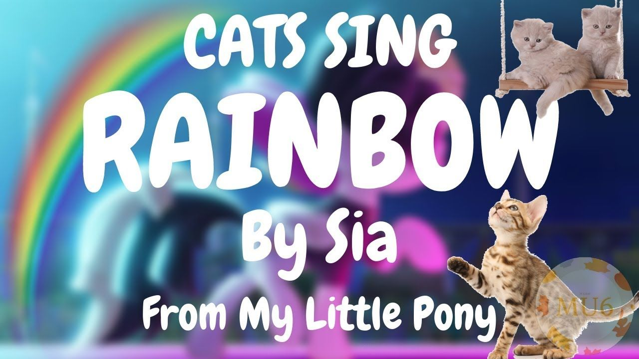 Cats Sing Rainbow From My Little Pony By Sia Cats Singing Song Singing My Little Pony Songs