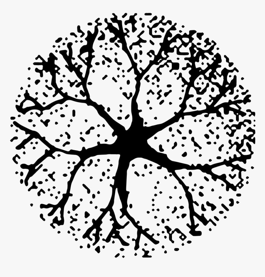 Tree Plan Png Download Architectural Tree Plan Png Transparent Png Tree Plan Architectural Trees Tree Plan Png