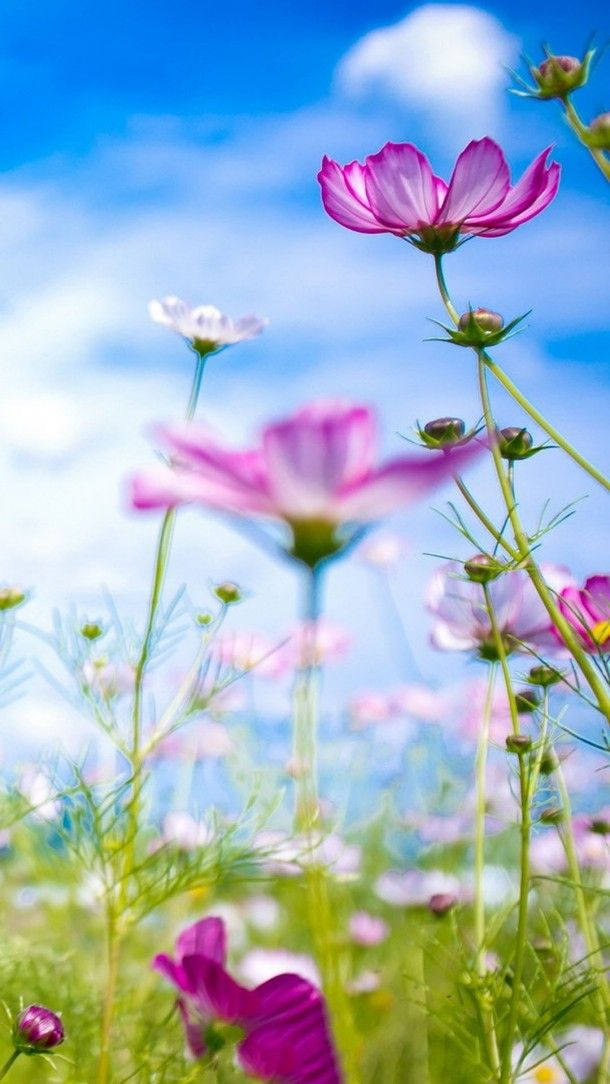 Flower Wallpapers Hd For Android Phones Flower Phone Wallpaper Purple Flowers Wallpaper Flower Wallpaper