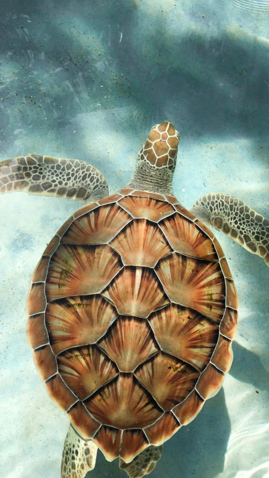 Amazing and colorful Turtle