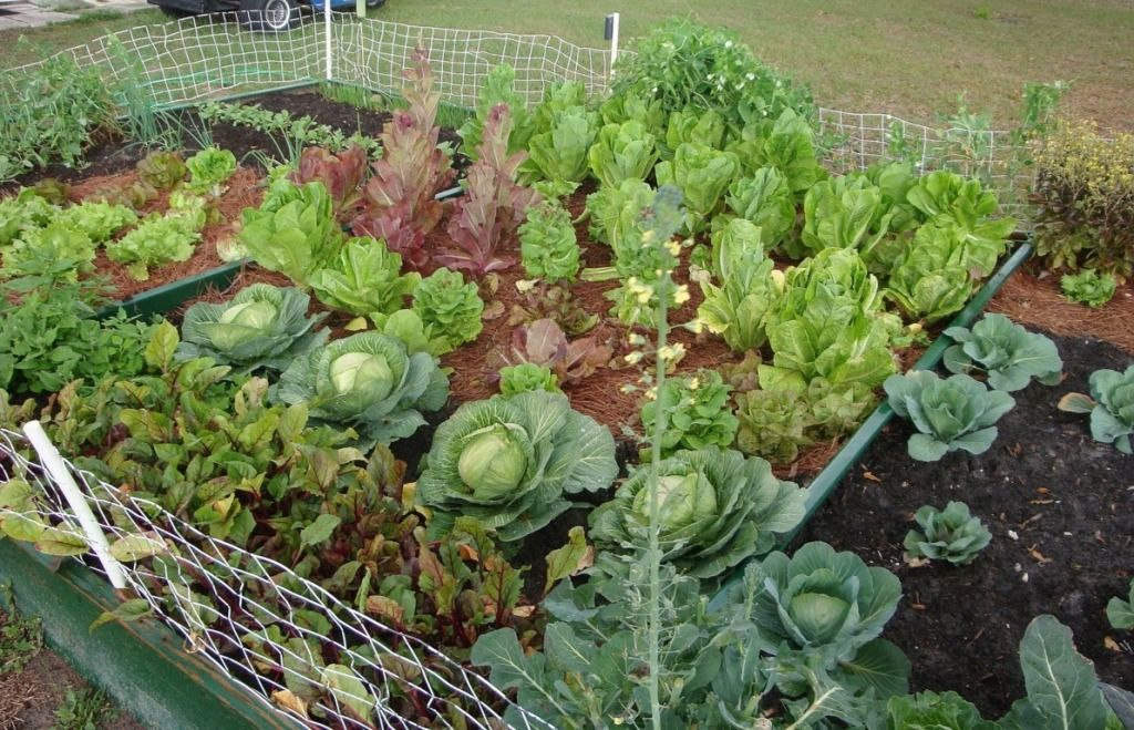 beautiful vegetable garden ideas Gardening Pinterest