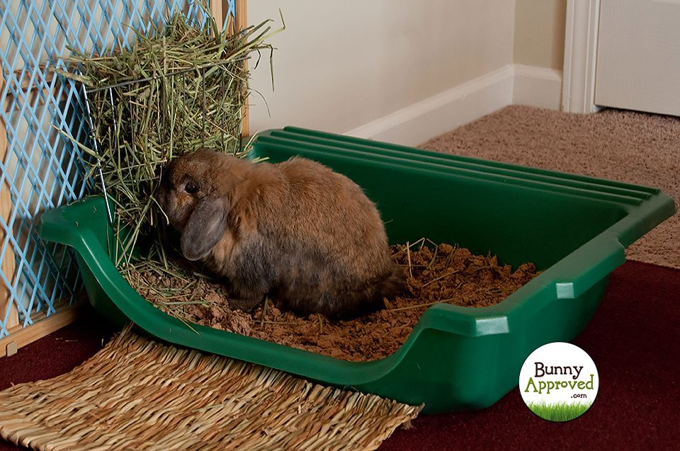 Litter box setup for rabbits what are the choices
