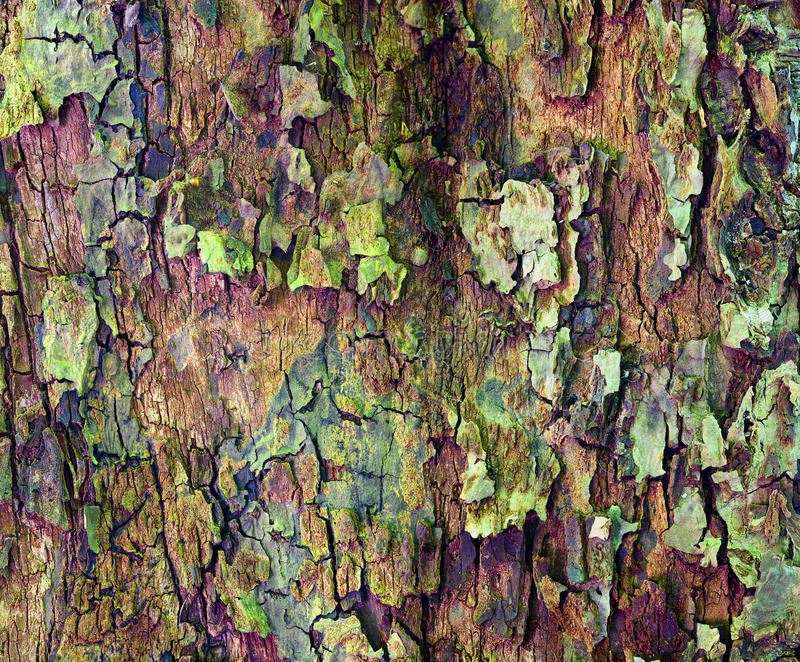 Download apple tree bark stock image image of textured