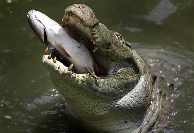 how to run away from a crocodile