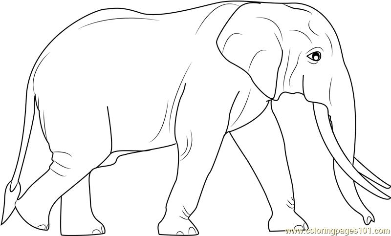 Sri Lankan Elephants Coloring Page Elephant Coloring Page Baby Zoo Animals Sri Lankan Elephant Sri lanka, traditional, tourism, srilanka, temple, decorated, perahera, ceylon, kandy, temple elephant, sri lankan elephant. sri lankan elephants coloring page