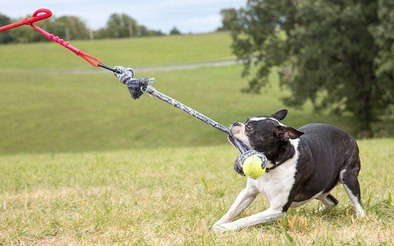 What Tug Toy Is Right For Your Dog Tether Tug Outdoor Dog