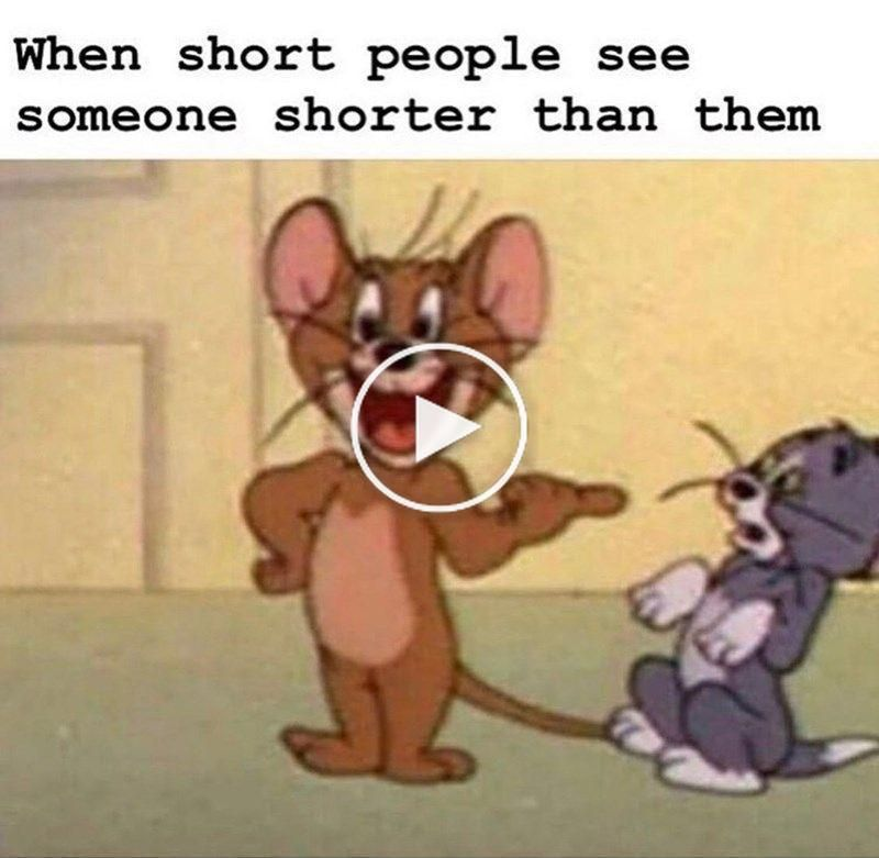 61 Funny Clean Memes That You Re Going To Love Clean Memes Jerry Memes Tom And Jerry Memes