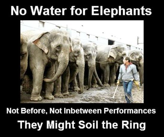 Circuses.THE CRUELEST SHOW ON EARTH! One of the egregious things circuses do is deny animals water before and in between performances! It is said they will catheter an elephant to empty her bladder so she cannot urinate during a performance. BOYCOTT CIRCUSES! HELP END THEIR SUFFERING!