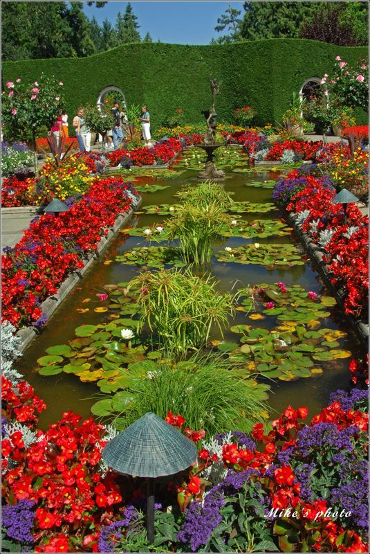Vivid colors of Butchart gardens Victoria BC. #butchartgardens