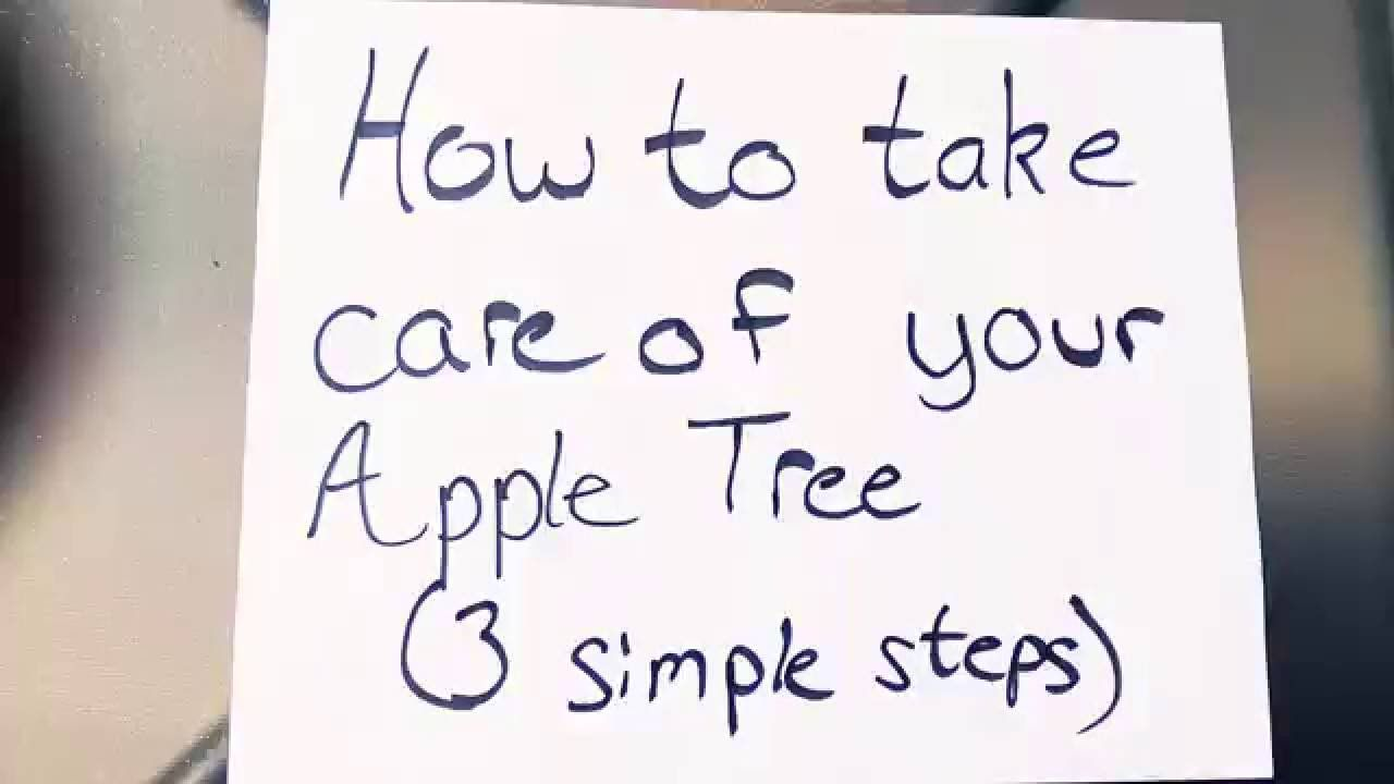 How to care for an apple tree in spring, summer and autumn Planting, pruning and caring for apple trees 91