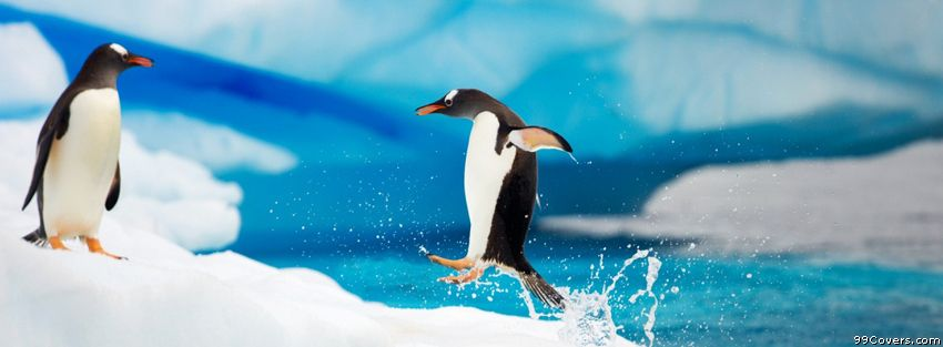Love to watch Penguins jump out of the water, LOL! Cute Gentoo penguins.