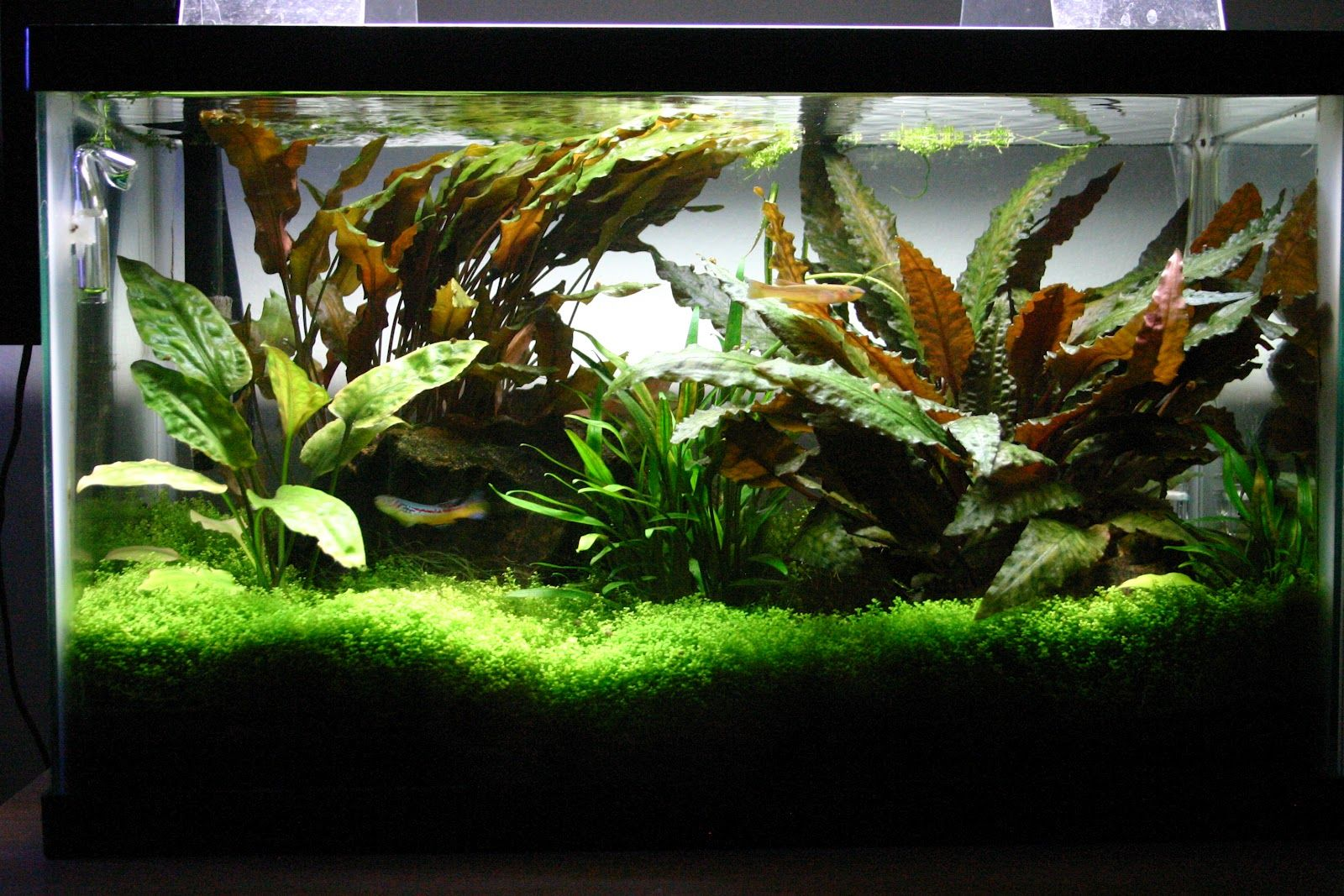 10 gallon planted tank freshwater pinterest for 10 gallon fish tanks