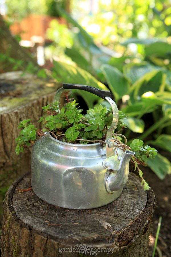 Tea kettle succulent planter from Garden Therapy