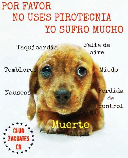 No A La Pirotecnia Perros Amantes De Perros Cuidar Animales