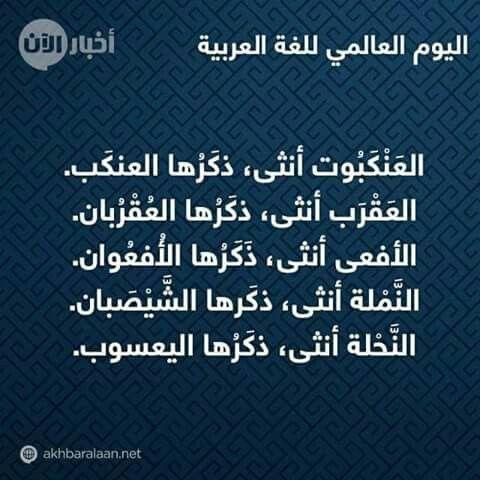 Desertrose اليوم العالمي للغة العربية Language Quotes Beautiful Arabic Words Knowledge Quotes