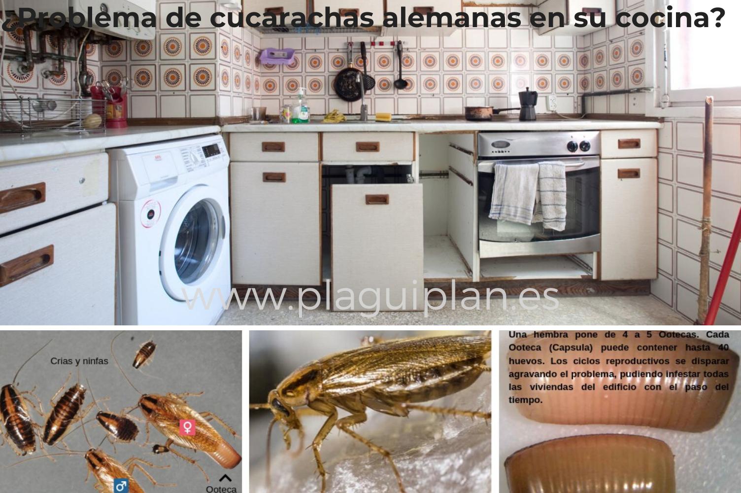 Como Acabar Con La Plaga De Cucarachas Chiquitas Problema De Cucarachas Alemanas En Casa En 2020 Control De