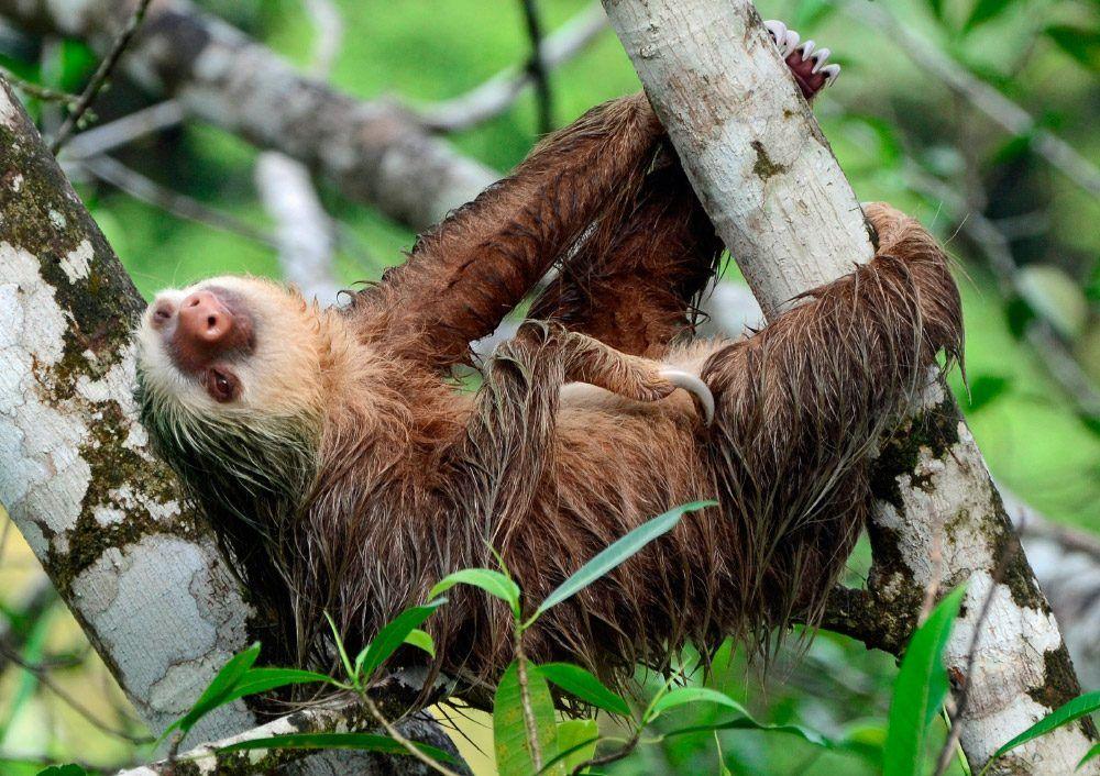 Perezosos, animal más lento del mundo Stuffed animals