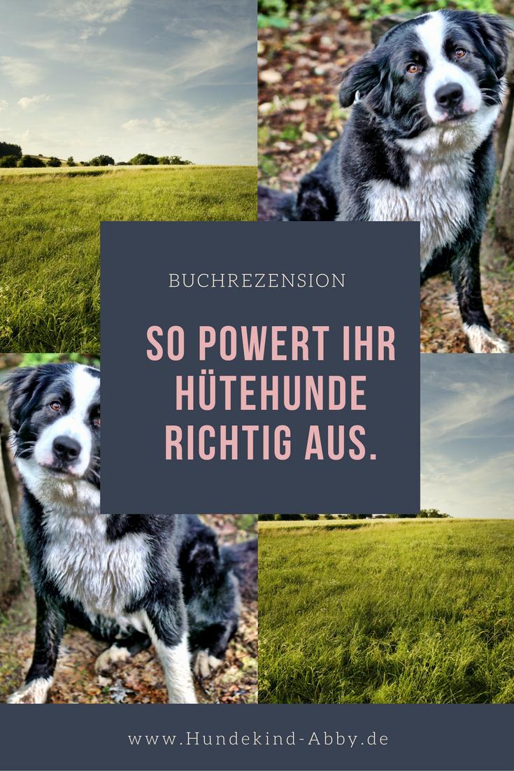 Hund Hunde Hundesport Beschaftigung Hundeblog Hundeblogger Hier Erfahrt Ihr Es Hunde Hunde Erziehen Hundetricks