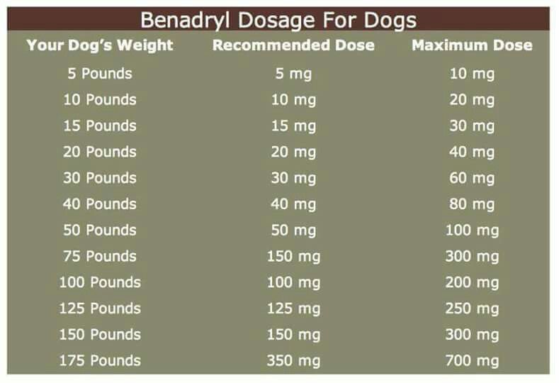 Benadryl dosage for dogs benadryl for dogs dosage dog